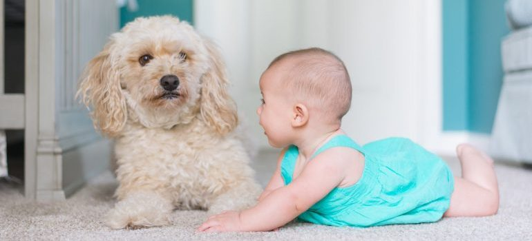 Baby crawling next to a puppy.