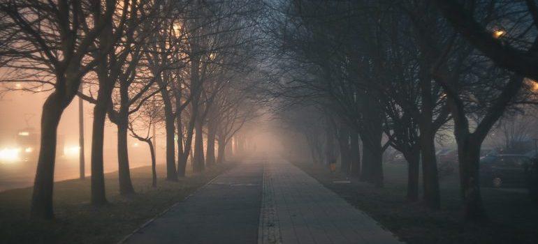 a path at dusk