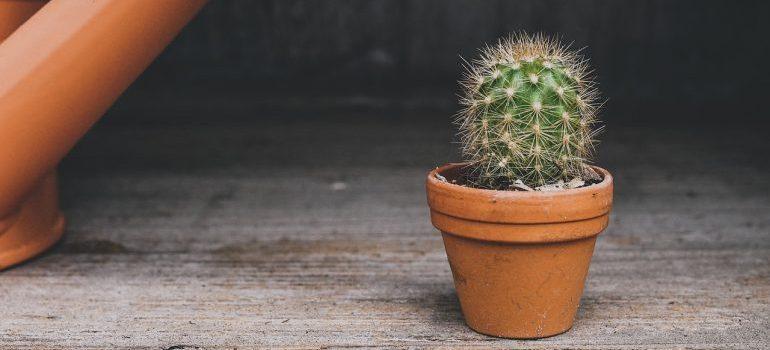 A small cactus pot