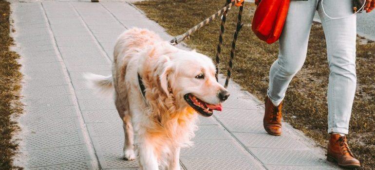 Take a dog for a walk